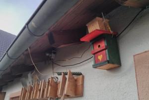 birdcam-outside