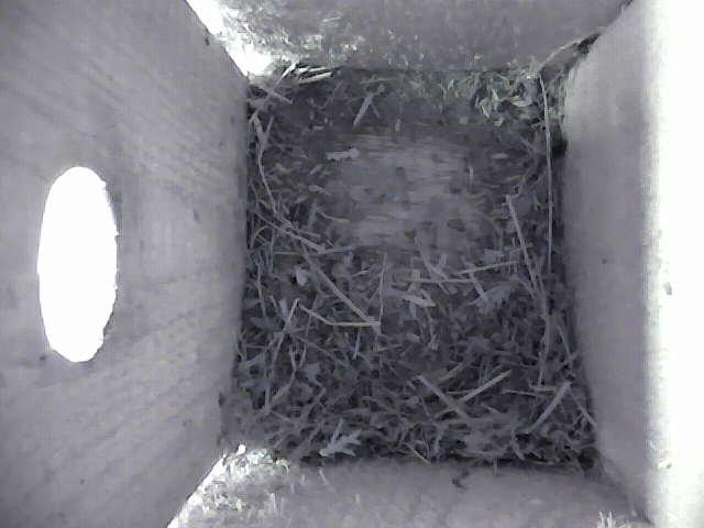 Birdcam snapshot